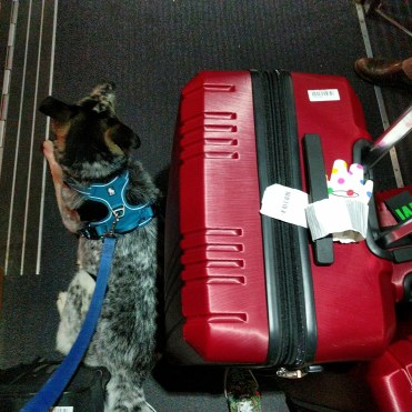 Moving overseas with a dog
