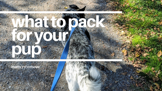 What to pack moving dog abroad