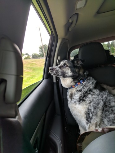 moving with a dog overseas